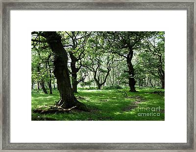 Brocton Coppice Framed Print by John Chatterley