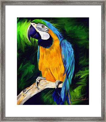 Brody Blue And Yellow Macaw Parrot Framed Print