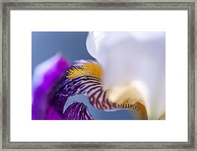 Broken Beauty. Macro Iris Series Framed Print