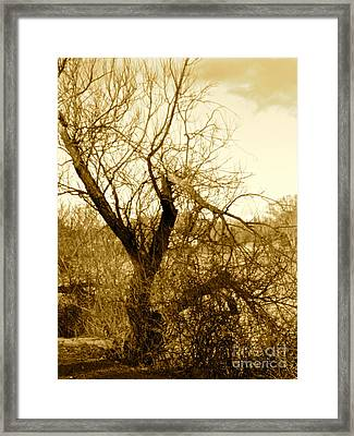 Broken But Beautiful Tree Framed Print by Q's House of Art ArtandFinePhotography
