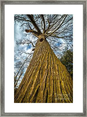 Broken Chestnut Framed Print by Adrian Evans