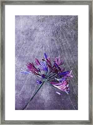 Broken Dreams Framed Print by Claudia Moeckel