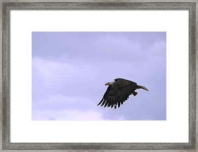 Broken Feather Eagle Framed Print by Kym Backland