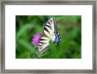 Broken Wing Framed Print by Andrea Dale