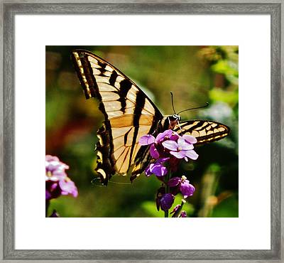 Broken Wing Framed Print