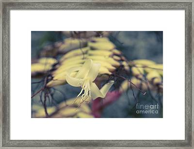 Bromeliaceae - Alcantarea Geniculata Framed Print