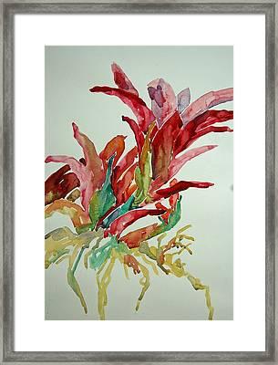 Bromeliad #2 Framed Print