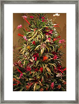 Bromeliad And Orchid Tree Framed Print by Suzanne Gaff
