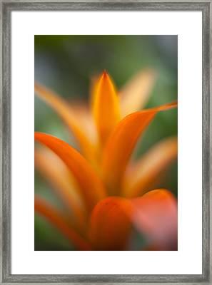 Bromeliad Flow Framed Print by Mike Reid