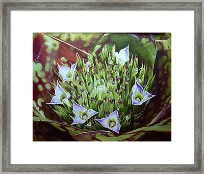 Bromeliad In Bloom Framed Print by Urszula Dudek