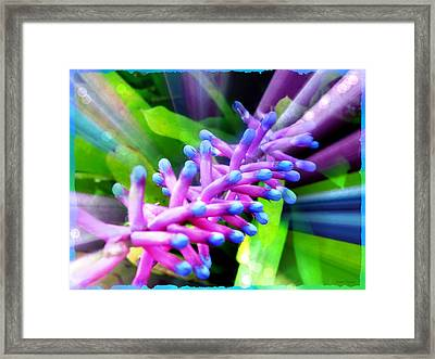 Bromeliad Magic Framed Print by Leanne Seymour