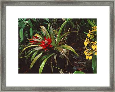 Bromeliad Plant With Orchid Framed Print