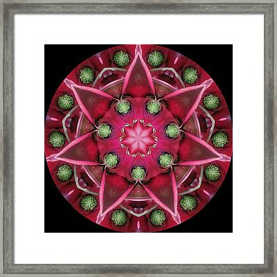 Bromeliad With Green Buds Framed Print by Dreams in the  Kaleidosphere