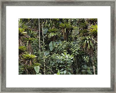 Bromeliads In Colombia Framed Print by Art Wolfe