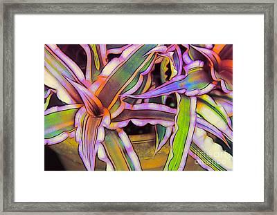 Bromeliads Framed Print