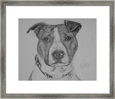 Bronco Framed Print by Kimber  Butler