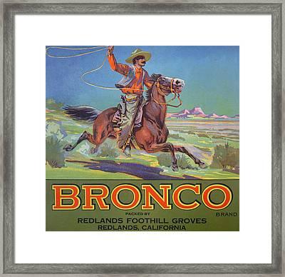 Bronco Oranges Framed Print
