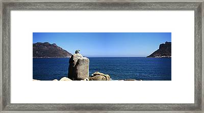Bronze Leopard Statue On A Boulder Framed Print by Panoramic Images