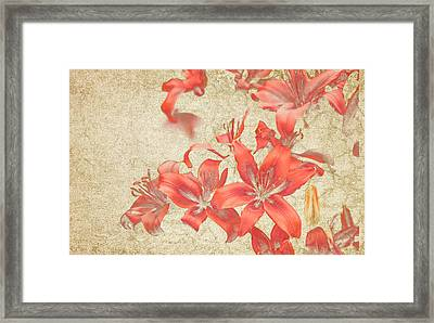 Bronze Lily Grunge Framed Print by Lesley Rigg