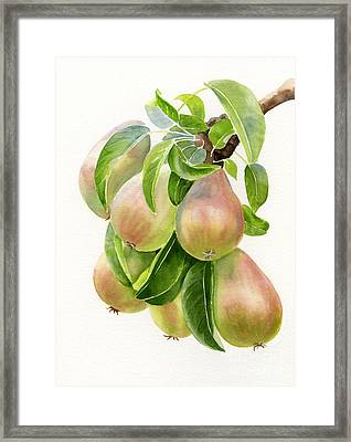 Bronze Pears With White Background Framed Print by Sharon Freeman