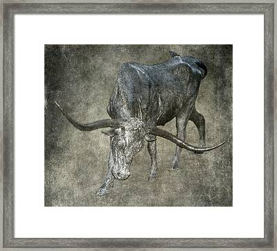 Bronzed Longhorn Framed Print