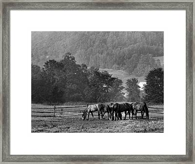 Framed Print featuring the photograph Broodmares by Joan Davis