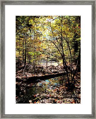 Brook And Pond Framed Print by Linda Marcille