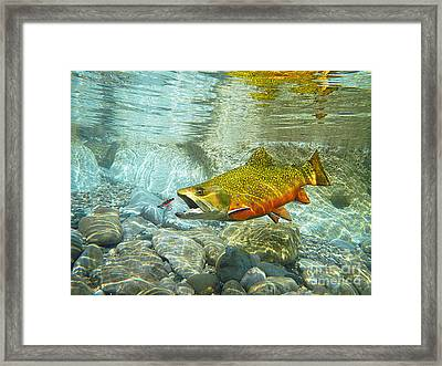 Brook Trout And Artificial Fly Framed Print