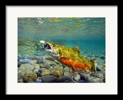 Brook Trout Image Paintings Framed Prints