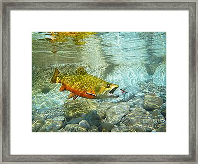 Brook Trout And Silver Doctor Framed Print