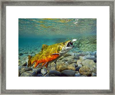 Brook Trout And Spinner Framed Print by Paul Buggia