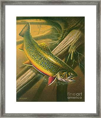 Brook Trout  Hideaway Framed Print by Jon Q Wright