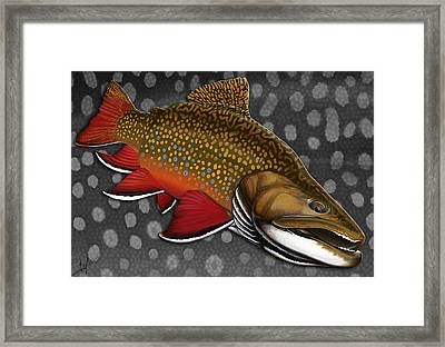 Brook Trout  Framed Print by Nick Laferriere