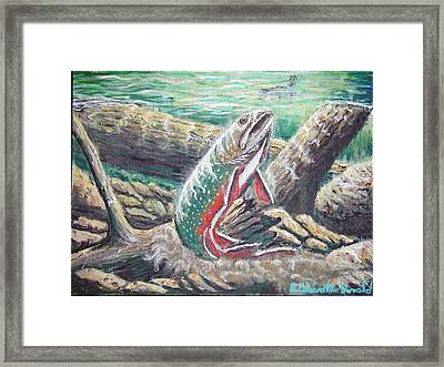 Brook Trouts Buff Ay  Framed Print by Carey MacDonald