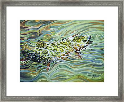 Brookie Flash Framed Print