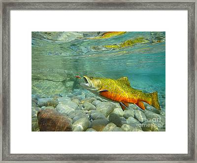 Brookie With Fly Framed Print