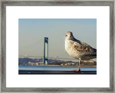 Brooklyn Seagull Framed Print by Jon Woodhams