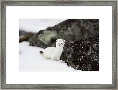 Brooks Range, Arctic National Wildlife Framed Print