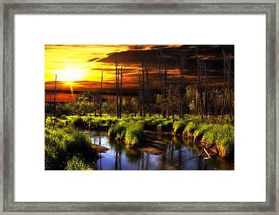 Brookstreet - Sunrise In The Forest Framed Print