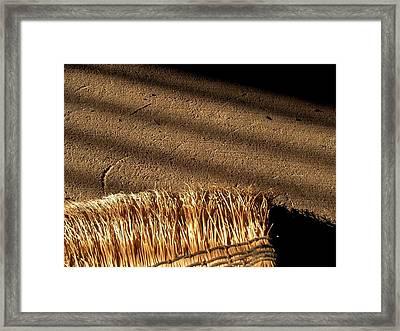 Broom - 3 Framed Print by Bridget Johnson