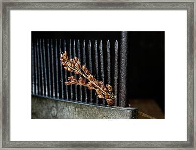 Broomcorn And Broomcomb Framed Print by Wilma  Birdwell