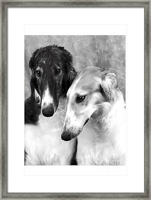Brother And Sister Borzoi  Framed Print by Maxine Bochnia