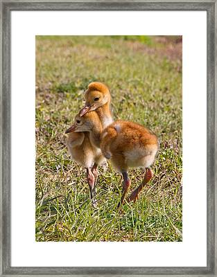 Framed Print featuring the photograph Brotherly Love by Phil Stone
