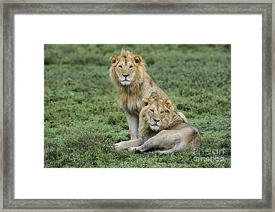 Brotherly Love Framed Print by Sandra Bronstein