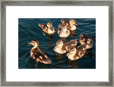Framed Print featuring the photograph Brothers And Sisters by Brenda Jacobs