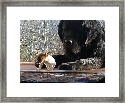 Framed Print featuring the photograph Brothers In Claws by Brian Boyle