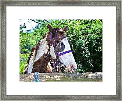 Framed Print featuring the photograph Brown And White Horse by Susan Leggett