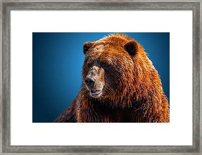 Brown Bear 2 Framed Print