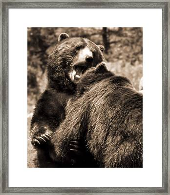 Brown Bear Competition Framed Print by Dan Sproul