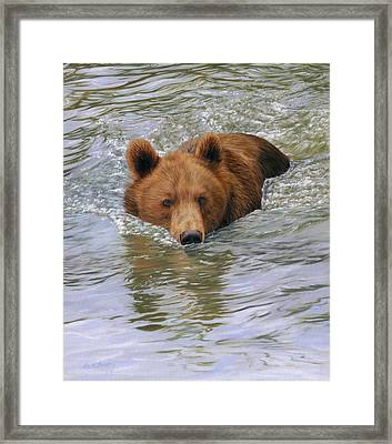 Brown Bear Framed Print by David Stribbling